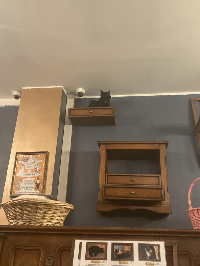 Black cat on a shelf